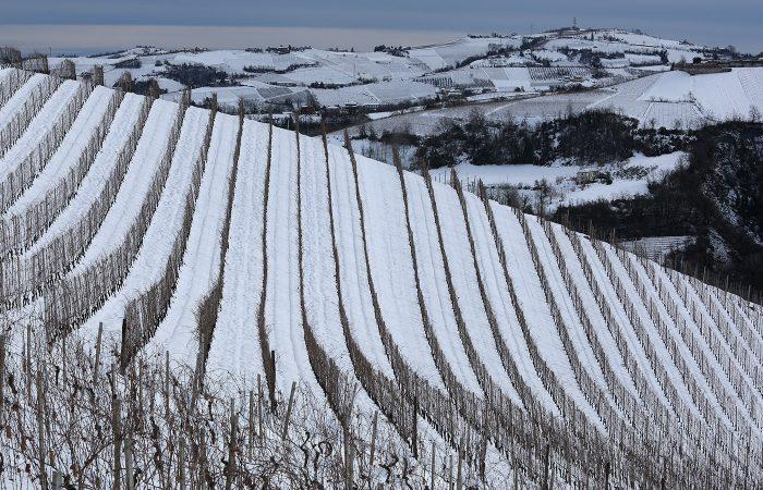 Piero Busso a Neive - Vigneti in inverno 3