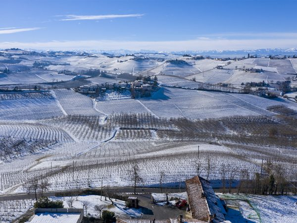 Vigneto Albesani in Inverno